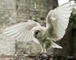 schools_owls_and_raptors_2_800x639